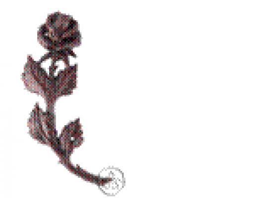 Роза гнутая